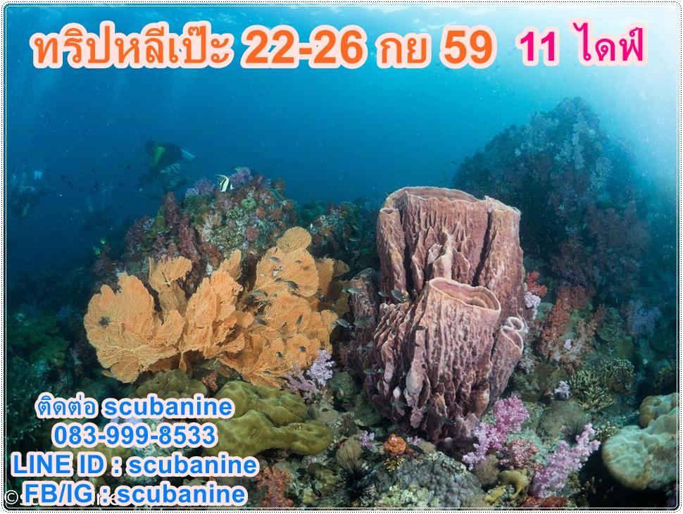 ทริปดำน้ำ หลีเป๊ะ Liveaboard เรือฟ้าใส ระหว่างวันที่ 6-10 กค 60 ดำน้ำ 11 dives