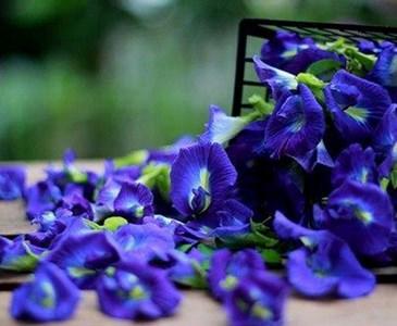 หัวน้ำหอม กลิ่นดอกอัญชัน : 002402