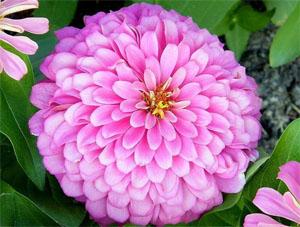 เปรียบเทียบภาพดอกไม้จริงกับพิมพ์ซิลิโคนรูปดอกบานชื่น