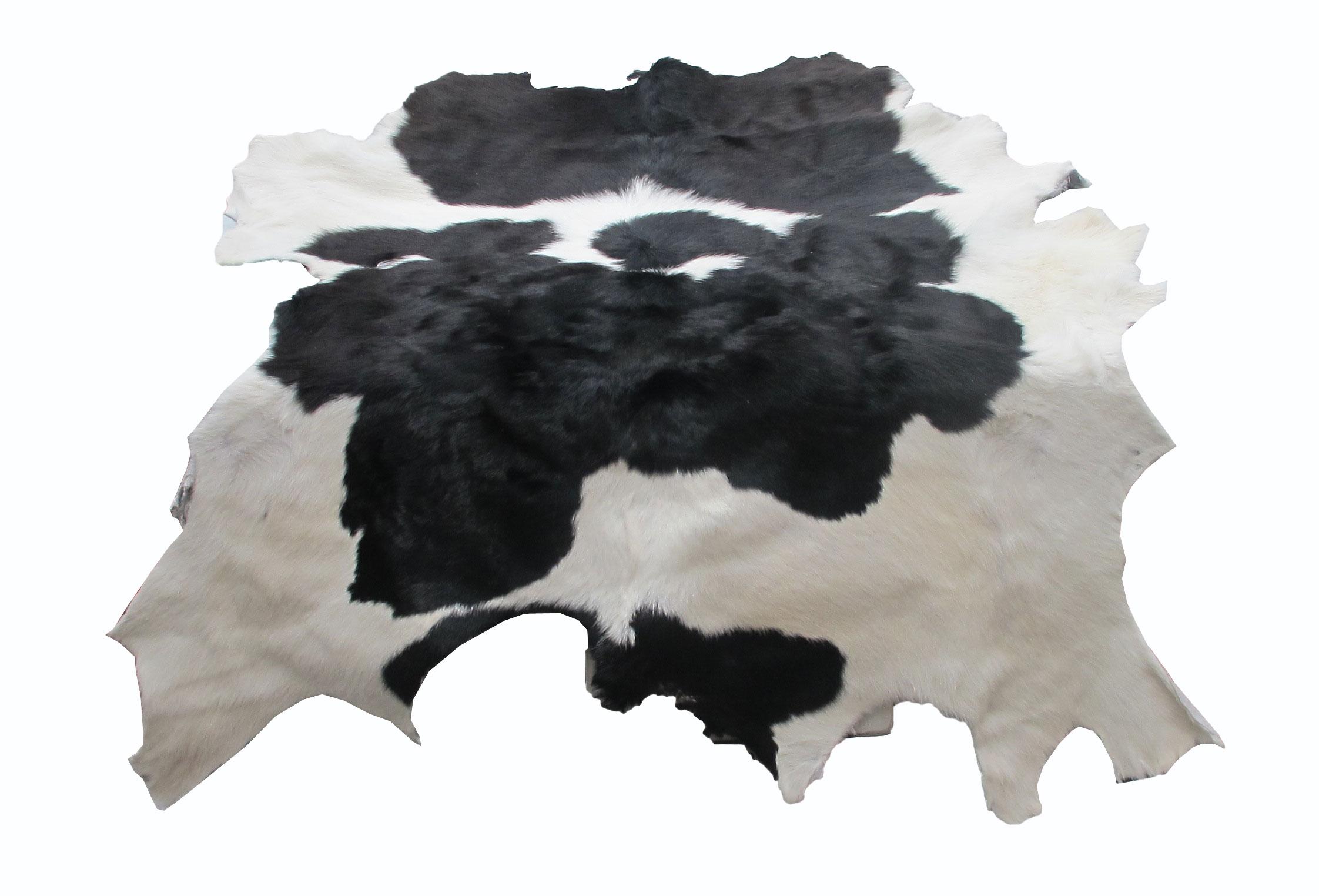 หนังแท้ หนังขนลูกวัว ใช้สำหรับตกแต่งฝาผนังบ้าน หรือ ใช้เป็นผ้าปูโต๊ะแล้วเอากระจกทับ หรือ ผ้าคลุ่มเก้าอี้นั่ง สำเนา สำเนา สำเนา สำเนา สำเนา สำเนา